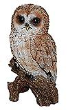 Vivid Arts Tawny Owl Real Life Ornamen
