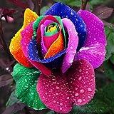Gemini_mall Multi-color Rainbow Rose Seeds Garden Plants Seeds...
