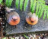 garden mile Robin Redbreast Resin 2pc Bird Set Highly Detailed...