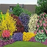 10 MIXED ESTABLISHED GARDEN SHRUBS * P9 POTS * NOT PLUG PLANTS*...